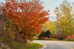 Last of autumn (LEXPIX_) Tags: autumn fall foliage red color tree leaves season vermont vt d500 2470 lexpix