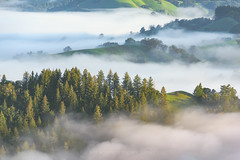 Ridge Hopping (Bob Bowman Photography) Tags: fog green hills trees oaks redwoods california sonomacounty northerncalifornia mist clouds morning spring