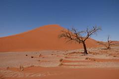 Namibia's Beauty:   18.  Dune 45, Sossusvlei (ronmcbride66) Tags: namibia namibiasbeauty sossusvlei dune45 dunes desert namib drought deadtree