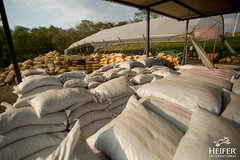Heifer Ecuador (Heifer International) Tags: ecuador heiferinternational composting