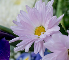 Thank you,Tom. (Omygodtom) Tags: sammysflowers pink yellow flower flickr blue white nature natural nikon d7100 tamron90mm lines outdoors colorful color soft