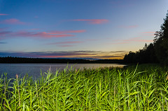 A bed of reeds (ArtDvU) Tags: bed reeds reed lakeshore lakescape lake landscape dusk twilight sunset summer finland nikon d7000 loukkojrvi