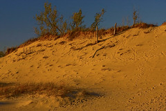 Warren Dunes State Park Sawyer Michigan at the Golden Hour 10-23-2016 0031 (www.cemillerphotography.com) Tags: transverse parabolic linear perched windblown berriencounty sawyer southwestmichigan harborcountry redarrowhighway recreation kiteflying waves lakemichigan marramgrass blowout valley hills ridge camping hiking