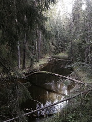 Yljuoksulla (Lauri Laurn) Tags: keravanjoki tuusula finland forest taiga river suomi trees woods latesummer fallentrees nature naturephoto