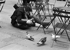 The photo session (D80_457995) (Itzick) Tags: nycsep2016 photosession camera photographer man chairs birds bw candid itzick d800