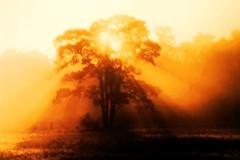 the end from the fog (sabrina. G) Tags: oktober nebel sonne dasende sonnenstrahlen durchbruch thegoldenachievement mindigtopponalwaysontop blinkagain