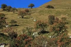 Bourg St-Pierre (bulbocode909) Tags: valais suisse bourgstpierre valdentremont montagnes nature arbres automne vert rouge bleu lestoules