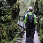 Through the gorge of green thumbnail