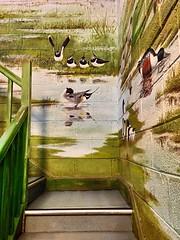 Wildfowl wall art (JulieK (finally moved to Wexford)) Tags: wall art painting ducks lapwing stairwell stairway step hww 2016onephotoeachday iphone5 wexfordwildfowlreserve ireland irish