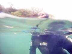 GOPR5942 (ambrogi_taubate) Tags: naturezaselvagem marinha mergulhando ubatuba sp brasil naturezamarinha fantstica apneia 10m setembro primavera 2016