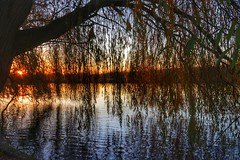 Curtain of Willow (Nick Fewings 4.5 Million Views) Tags: bishamabbey buckinghamshire thames curtain shade light reflection river sunset contrast leaves branches willow