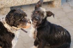 Smile Felix! (lorenz.markus97) Tags: dog beautiful cute cuteness lovely smile best friends animal