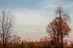 Tramonto autunnale (andrea.prave) Tags: nature natura mantegazza rogorotto parcoagricolo bosco lombardia lombardy migrants traveler flying birds volo autunno fall autumn 秋 automne otoño herbst осень tramonto sunset atardecer solnedgång solnedgang 夕焼け غروب 日落 שקיעת שמש coucherdusoleil ηλιοβασίλεμα zonsondergang pôrdosol закат puestadelsol sonnenuntergang campagna county vanzago countryside campaña campagne kampagne キャンペーン кампания حملة 运动
