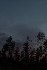 The Gloaming, Montague Plains, early November. (koperajoe) Tags: trees silhouette sunset twilight crescentmoon sky pines gloaming dusk