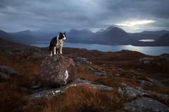Molly the Conqueror (svensl) Tags: molly border collie landscape scotland torridon schottland pet dog canine portrait
