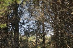 161018-7886-Woods (Sterne Slaven) Tags: massachusetts plymouth marblehead capecod marthasvineyard edgartown oakbluffs vineyardhaven salem lynn turkeyvulture seawall tide waves seaweed historic october sailboats lighthouse hightide lowtide wildturkeys offseason canoe sunset fisherman seagulls gulls nakedwoman lensbaby katamabeach lucyvincentbeach gayhead chappaquiddick lagoon bramble whalingchurch seacreature cemetery plimothplantation roosters spiderwebs oldburialhill pilgrims clamdiggers sanddunes barnstable taunton sexynude sunhalo fullmoon sterneslaven water fountain 1600s wampanoag mayflower pelt harbor chathamma seals ocean atlanticocean coastal newengland actors
