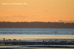 Sunrise on Boundary Bay (Terrance Carr) Tags: dncb 201649 dike terry carr terrycarr 2016 december 20161206