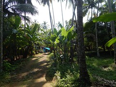 Villages Near Calicut Kerala Photography By CHINMAYA M (30)