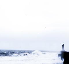 Torrent of the Tyne (stuartnorman1) Tags: tyne torrent sncreative tynemouth waves brisk sharp cold strong huge gigantic massive big winter november north sea northsea photographofwaves wavephotography photos pier port harbour longsands working tynemouthsailingclub sailingclub clouds sky autumn storm ocean oceanic stormyseas rough weather badweather badweatherpicture white horses whitehorses nature natural tide hightide high low lowtide deepwater dangerouswaves bigwaves surf bigsurf largewaves coldweather blue azure crest trough rocks rocky beach shore coast coastline ships shipping dock docks