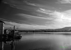 Bridge to Puget Island, Cathlamet, WA, 11-3-2016 (convertido) Tags: cathlamet washington wa columbia river pugent island bridge clouds water boats webs cobwebs plant fall sunset afternoon black white color photography outdoor nature