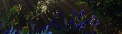 IMG_8826_Fotor02 (Ela's Zeichnungen und Fotografie) Tags: hannover stadtpark landschaft natur herbst blumen sonnenlicht congresszentrum stadt