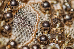 Stitches and Beads (Boba Fett3) Tags: beads thread gold golden closeup upclose depthoffield macro macromonday lace stitch stitches