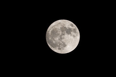 Super Moon, November 14th, Oakland, California, USA (takasphoto.com) Tags: 80400mmf4556dvr afvrzoomnikkor80400mmf4556ded astrophotographie astrophotography country darksky galaxies galaxy highiso lens lightpollution longexposure longtimeexposure lua luna lune maan moon měsíc mặttrănglớn nikkor nikkor80400mm nikkor80400mmf4556dafvred nikkorlens nikon photography planets rural star stars sun superlune supertelephoto superluna supermoon telephoto ay måne mặttrăng perigeesyzygyoftheearth–moon–sunsystem φεγγάρι а́строфотогра́фия а́строгра́фия астрономи́ческаяфотогра́фия луна عکاسینجومی قمرعملاق قَمَرٌ खगोलीयफोटोग्राफी พระจันทร์ スーパームーン ニッコール 固定撮影 天体 天体写真 天文写真 天文攝影 彗星 恒星 惑星 星団 星座 星景写真 星雲 月 月亮 衛星 超級月亮 長時間露光 달 슈퍼문 천체사진술