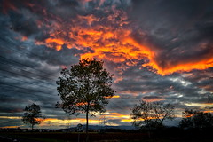 Fire ! (Bruno MATHIOT) Tags: orange sky sunset soleil nuages clouds alsace france french wideangle eos canon hdr aurora 760d 1020mm fin de journe arbre silhouette shadow color