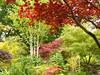 Colour at the Four Seasons Garden (Audrey A Jackson) Tags: panasonicdmctz3 walsall fourseasonsgarden autumn colour nature beauty acers silverbirches 1001nightsmagiccity