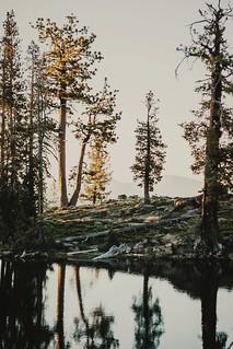 caribou dusk