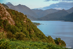 Loch Duich. (Scotland by NJC.) Tags: fjord inlet sound creek firth sealoch enseada 水湾 ensenada crique bucht insenatura 入り江 작은 만 trees foliage vegetation arboretum شَجَرَة árvore 树 drvo strom træ boom árbol puu arbre baum δέντρο albero 木 나무 tre drzewo copac дерево mountains hills highlands peaks fells massif pinnacle ben munro heights جَبَلٌ montanha 山 planina hora bjerg berg montaña vuori montagne βουνό montagna fjell