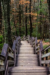(rstutts44) Tags: nature outdoors staircase steps fall mountains trail hiking