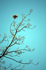 Schlossgarten Mnster Nov. 2016_15 (dcs 0104) Tags: schloss johann conrad schlaun westflischewilhelmsuniversitt universitt mnster nikon d3100 d800 nikkor 50 50mm 18 g 55300 55300mm 3556 vr flora baum strauch blatt arbre arbuste heester bush busch feuille leaf himmel sky ciel hemel botanischergarten garten garden jardin tuin herfst herbst autumn automne deutschland westfalen westfalia duitsland allemagne germany