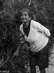 Ubud (amsterdameric) Tags: localasia travelazie rijstvelden ubudrijstvelden ubud azie travel olympus asia