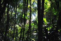 Jeux de lumire. (Claudia Sc.) Tags: brsil brasil brazil saopaulo jardin botanique vgtal v
