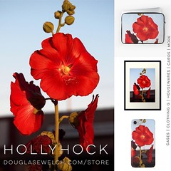Get these Hollyhock cases, prints, laptop sleeves and much more from http://ift.tt/1hfrEWq #hollyhock #flowers #garden #nature #red #technology #cards #clothing #home #housewares #gift #arts #crafts (dewelch) Tags: ifttt instagram get these hollyhock cases prints laptop sleeves much more from douglasewelchcomstore flowers garden nature red technology cards clothing home housewares gift arts crafts