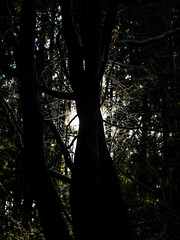 In the black forest (The Adventurous Eye) Tags: in black forest dark trees small light shining