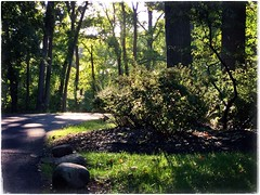 (Ruth Nicholas) Tags: morningsun sunshinesprinkles landscapedlawn residentialneighborhood road trees shrubbery greenfoliage