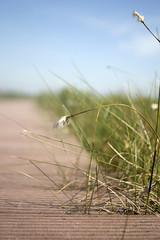 (LucyKGraham) Tags: nature reserve cumbria campbell wetland solway bowness rspb