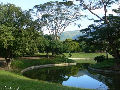 Paisagismo e jardinagem com fotos
