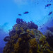 Tower of soft coral