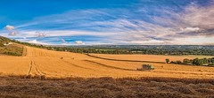 Combine harvester (James Waghorn) Tags: light summer england sky panorama sun tree field clouds golden countryside kent nikon harvest sigma crop ultrawide northdowns maidstone lightroom combineharvester sigma1020 d5000 blinksuperstars bestofsuperstars blink4gallery