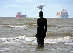 Birds eye view - Another Place - Crosby (delticfan) Tags: seagulls alyssa antonygormley anotherplace crosbybeach mscalyssa