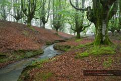 Hayedo de Otzarreta (Toni Duarte) Tags: longexposure trees naturaleza nature water forest agua arboles h2o bosque bizkaia euskadi vizcaya aigua paisvasco largaexposición vizcaia toniduarte llargaexposició gettyimagesiberiaq2 ©2013toniduarte