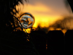 Once in a Blue Moon (Shelby's Trail) Tags: blue orange moon glass silhouette sunrise fence bokeh palm frond eightdaysaweek hbw twtme bokehwednesday hbwbringingtheblurrysince08