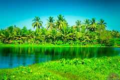 KERALAM (Anoop Sasindran) Tags: india nature kerala aluva alwaye companypady