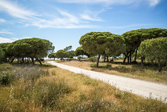 Faro (RayKippig) Tags: portugal faro algarve riaformosa naturschutzgebiet parquenaturaldariaformosa