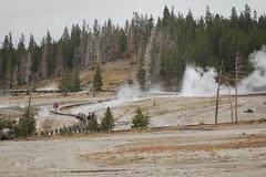 Sawmill Geyser, Yellowstone (David A's Photos) Tags: park basin september upper national area yellowstone wyoming geyser thermal sawmill hotsprings geysers 2013
