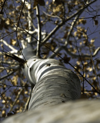 albero (stefano bertelli) Tags: wood alberi canon natura albero badia legno corteccia eos50d
