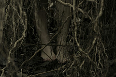 Roots of the Earth that keep me grounded (Marrek Photos) Tags: wood feet norway forest dark foot roots mysterious concept conceptualphotography vision:outdoor=0924